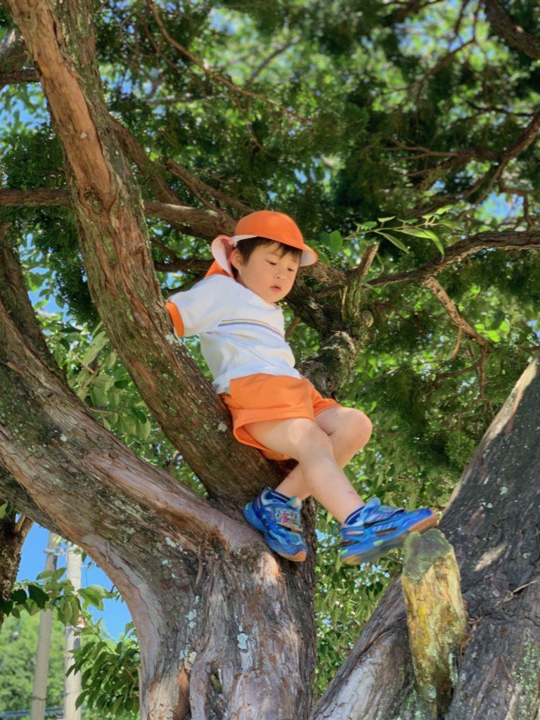 白石町 わかば保育園 木登り1