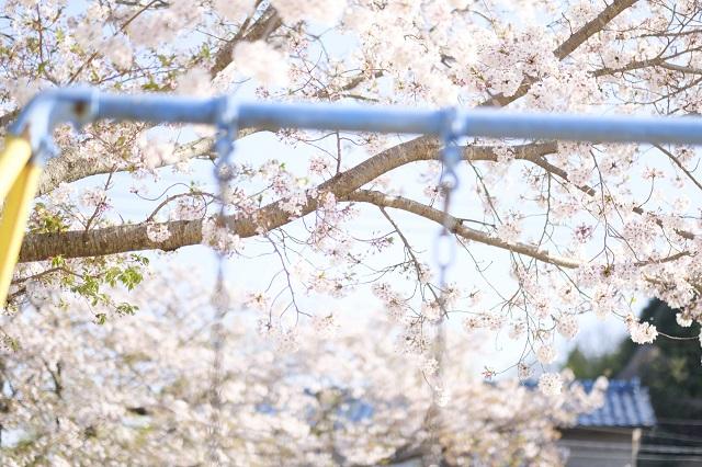 佐賀県 白石町 保育園 春 諸石撮影10